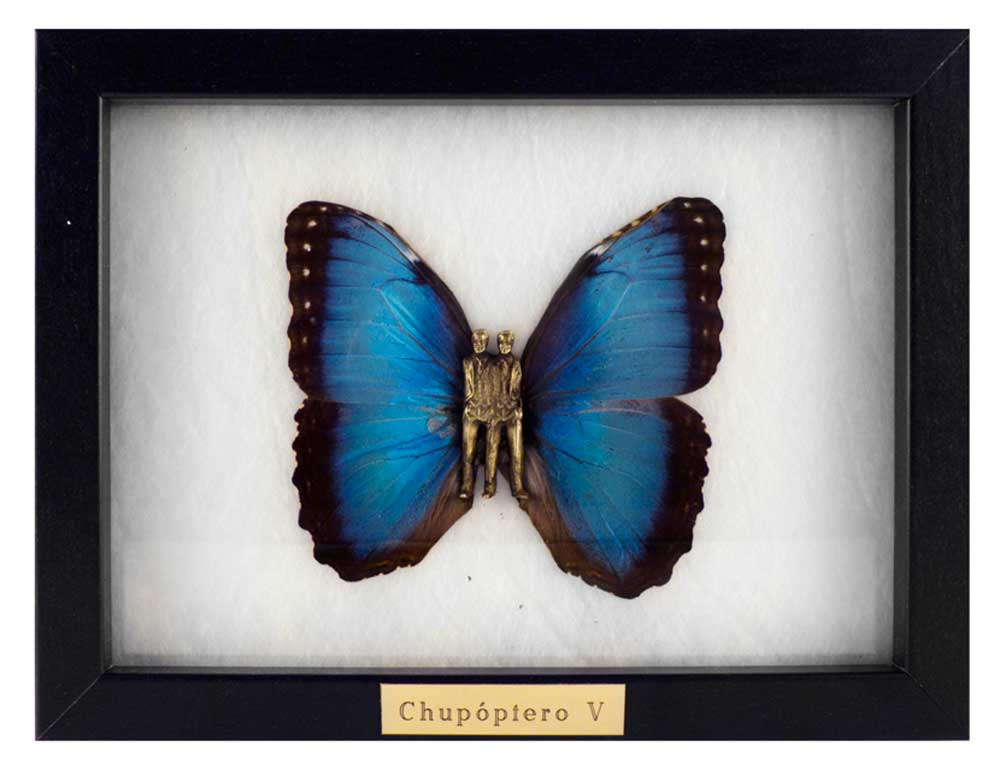 Chupóptero-V---laurasalguero