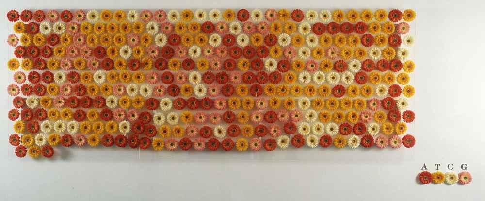 NELA OCHOA | Gen Gerbera, 2004 Flores de seda sobre metacrilato