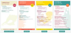 Planes de participación_Redes Vivas | Mujueres Mirando Mujeres | Carmen Tomé